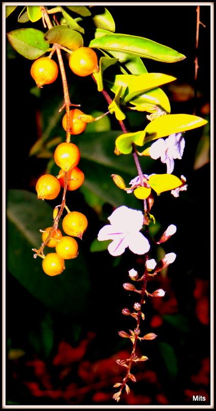 Delicate Flower - 3