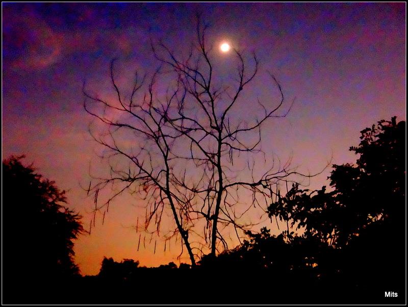 An Evening - 4