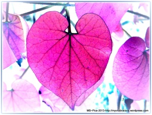 Leaf - Heart Shape